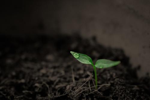 Plány ugandské vlády na rozšíření orné půdy