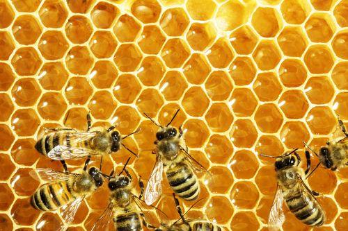 Čeští včelaři na Apimondii 2019 v Kanadě