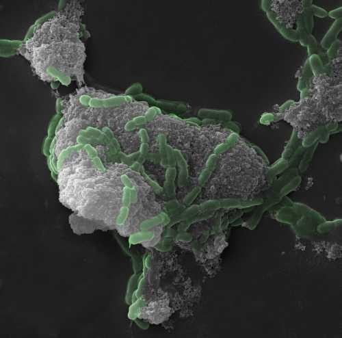 Phramaceutical Biotechnology