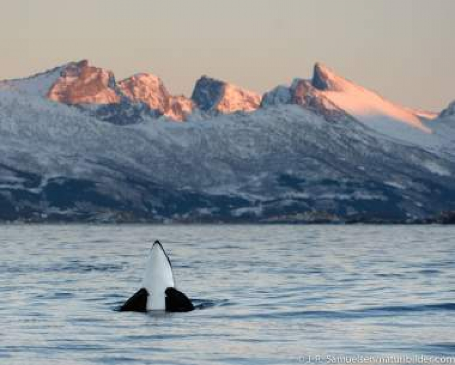 Pohjois-Norjan upeat kalastajakylät 28.8. - 5.9.2020 3