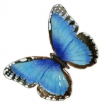 Bovano - B1 - Single Blue Morpho Butterfly