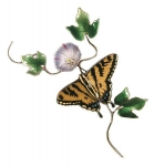 Bovano - B81 - Tiger Swallowtail Butterfly on Morning Glory