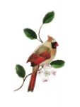 Bovano - W4113 - Female Cardinal on Dogwood Flower