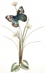 Bovano - B18 - Blue Beauty Butterfly