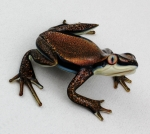 Scott Bisson - Frog Sculpture - Bronze