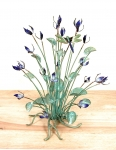 Bovano - T18 - Blue Flowers with Dragonfly