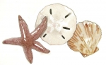 Bovano - W1016 - Starfish, Sand Dollar and Scallop Shell