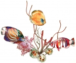 Bovano - W1660 - Blue Ring Angelfish, Golden Butterfly Fish, Harlequin Tuskfish and Coral