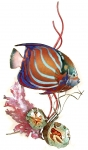 Bovano - W1665 - Blue Ring Angelfish in Coral