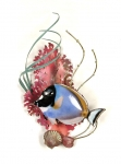 Bovano - W1945 - Powder Blue Surgeonfish and Coral