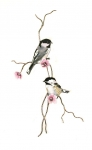 Bovano - W4434 - Chickadee Pair on a Pink Flowering Branch