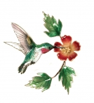 Bovano - W445 Hummingbird with Trumpet Flower