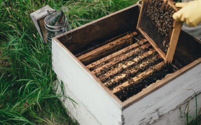 When technology and sustainability meet in beehives