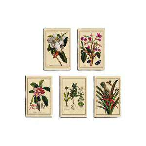 Baño y aromas - Laminas de arte botánico 5 uds (decoracion)