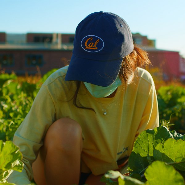Berkeley Student Farms grows more than food