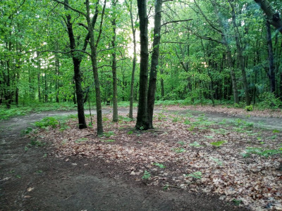 Group camping, wooded, plenty of space, secluded, shady