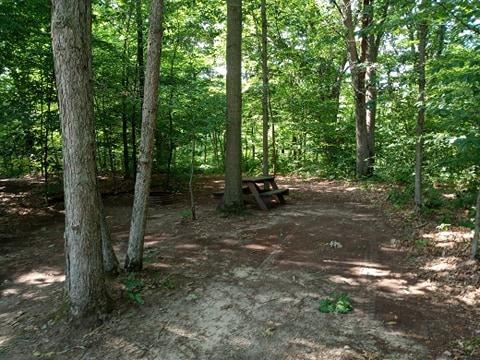 Wooded-tent-site-36