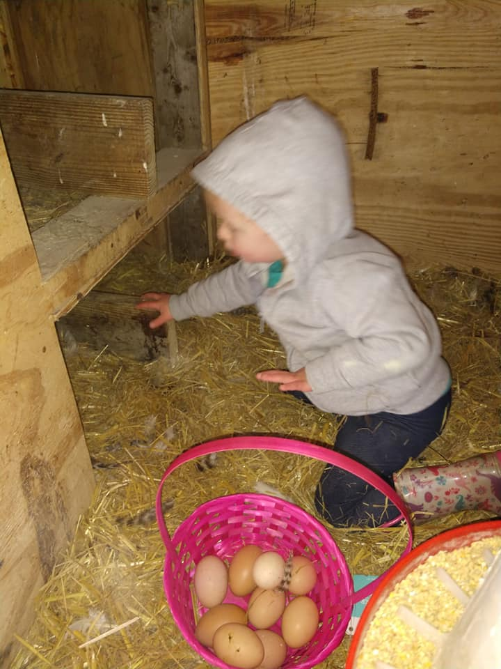 Farm fresh eggs picked by our very own Willow