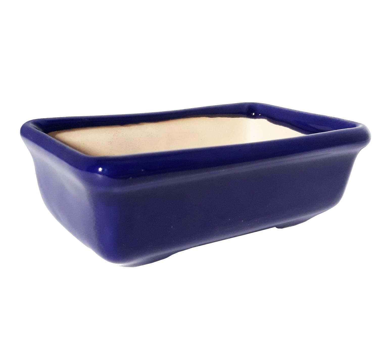 Bonsai Azul - 55