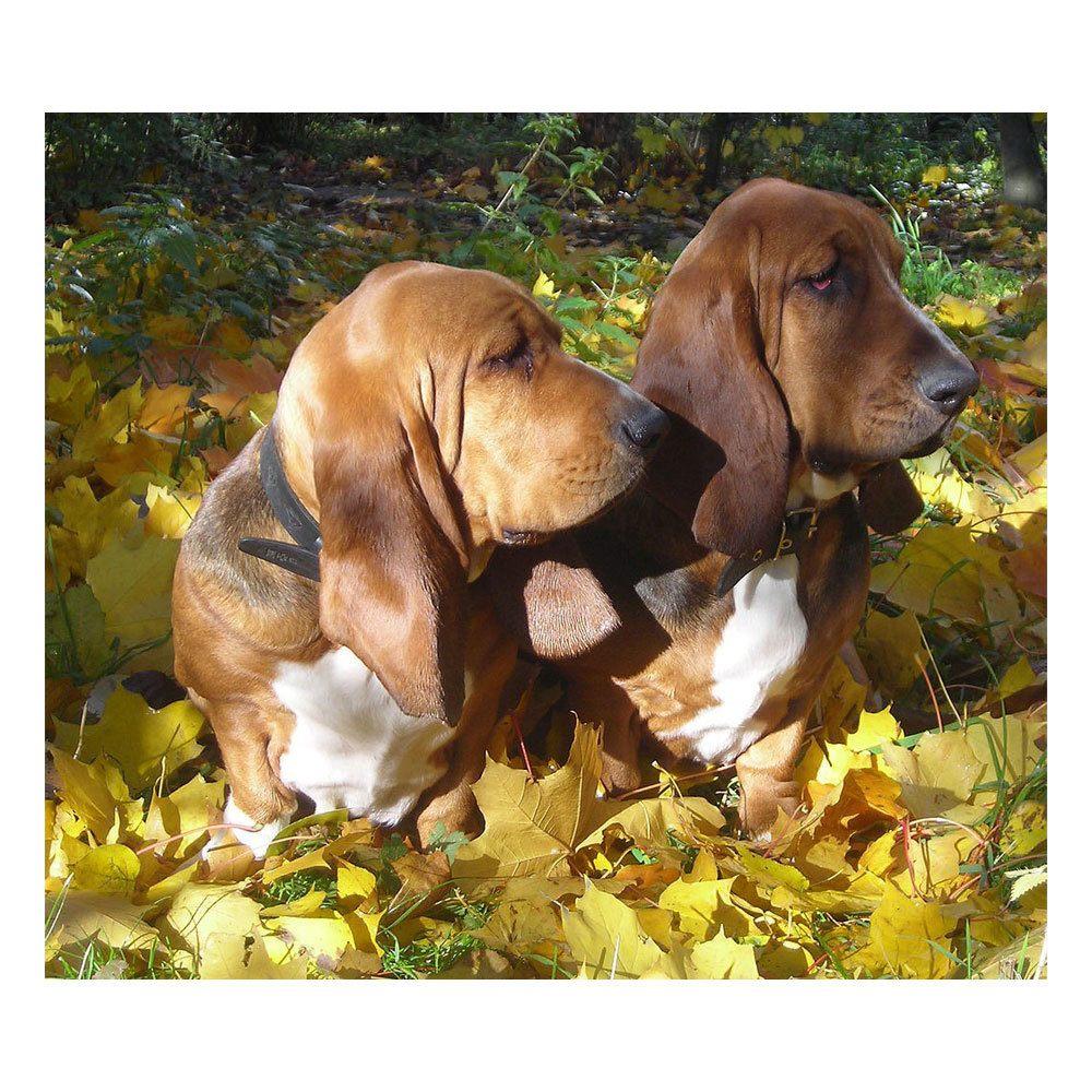 Quadro Decorativo em MDF Animais: Cachorros - 15 x 20 cm