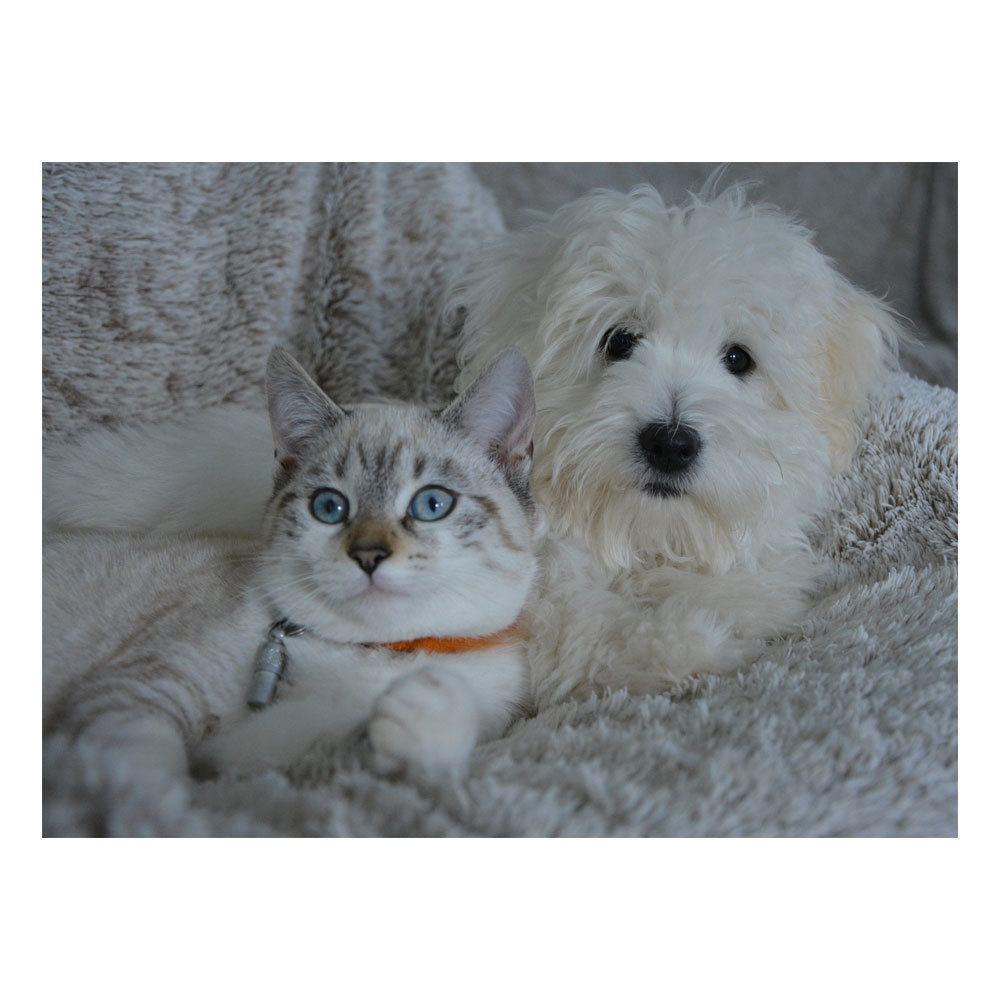 Quadro Decorativo em MDF Animais: Cão e Gato - 15 x 20 cm