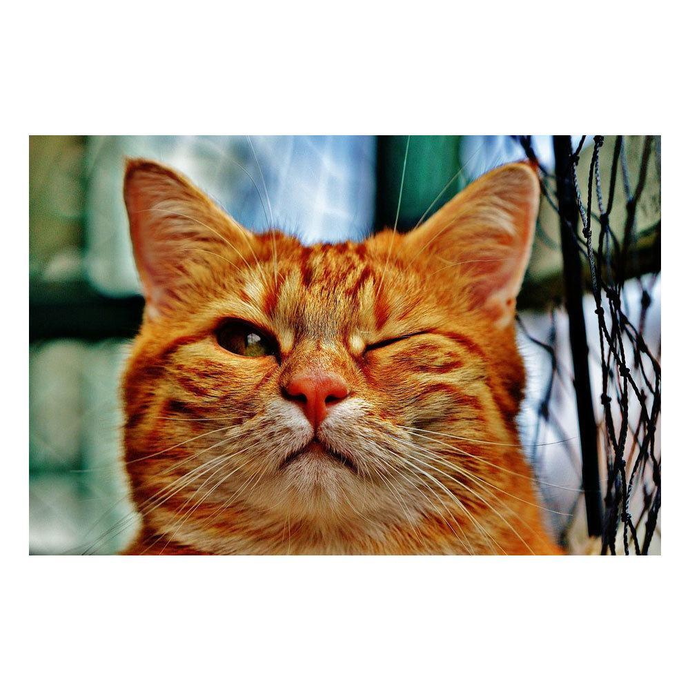 Quadro Decorativo em MDF Animais: Gato - 15 x 20 cm