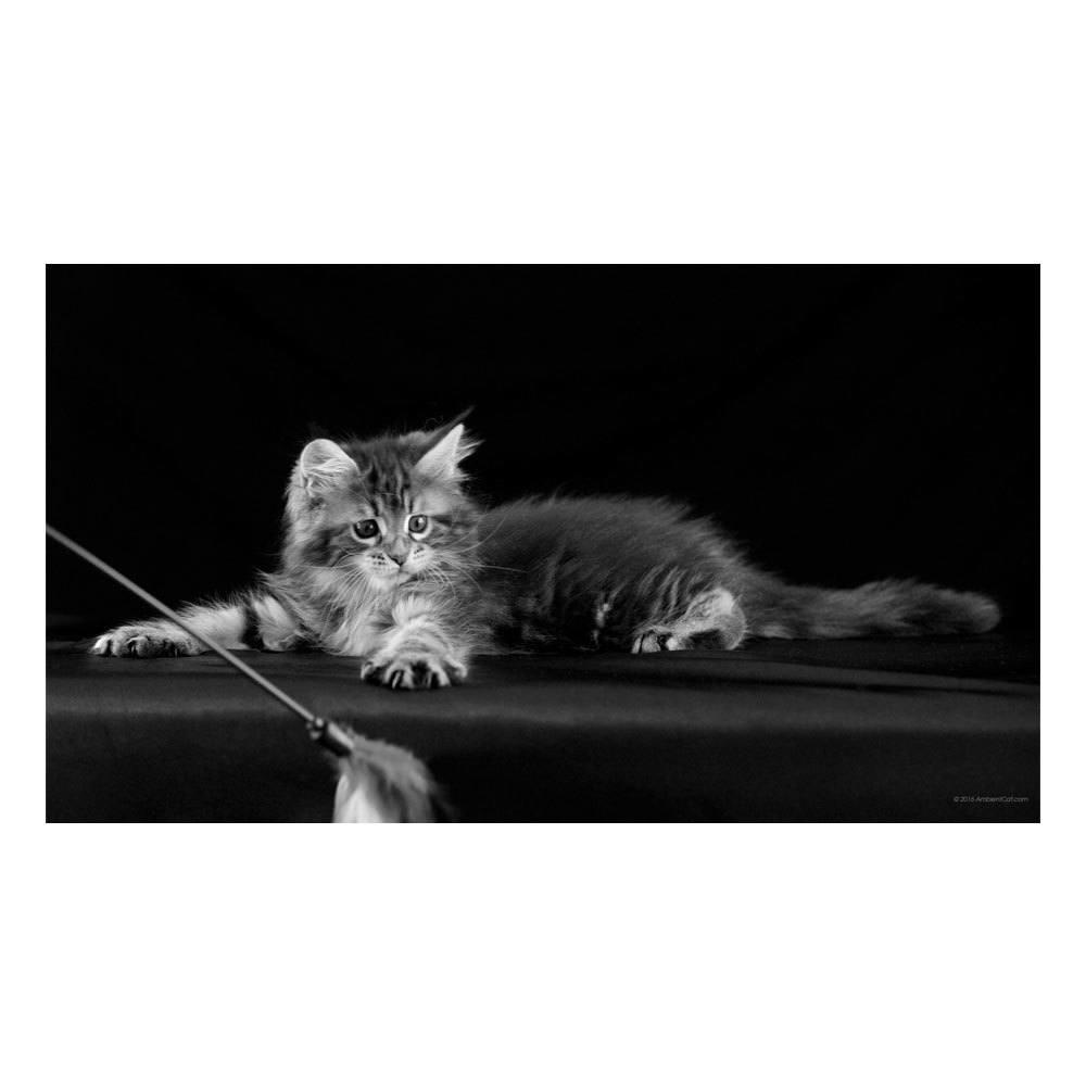 Quadro Decorativo em MDF Animais: Gato - 29 x 40 cm - Preto e Branco