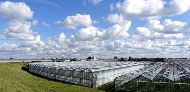 https://bommelerwaard.vvd.nl/nieuws/43992/glastuinbouw