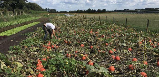 https://oisterwijk.vvd.nl/nieuws/39528/vvd-wil-haaren-betrekken-bij-veehouderijbeleid