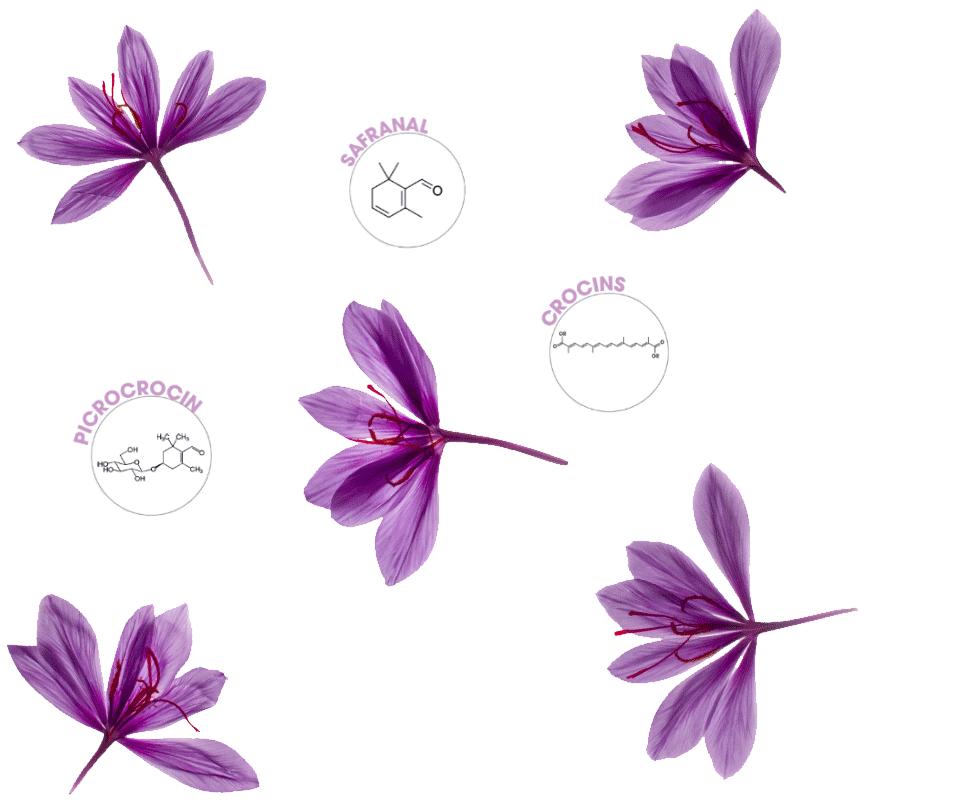 saffron metabolites