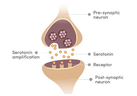 safranal amplifie la serotonine