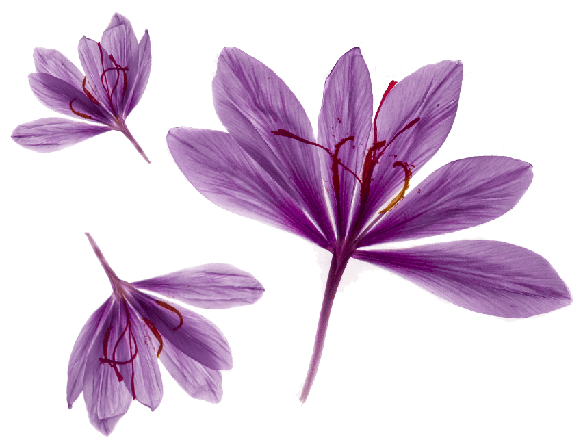 saffron activ'inside