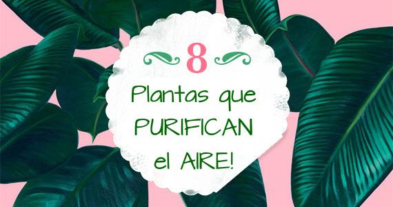 Las mejores 8 plantas para purificar el aire del hogar - Plantas de interior que purifican el aire ...
