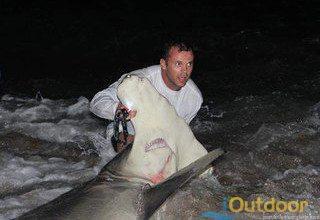 Massive shark caught