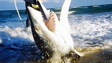 Miami Shark Fishing charters