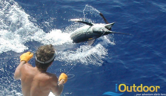 Mississippi deep sea fishing charters - Mississippi offshore fishing