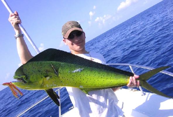 Marathon Offshore Fishing Mahi Mahi