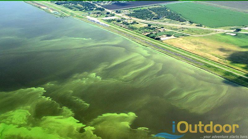 Lake Okeechobee Algae Bloom 3