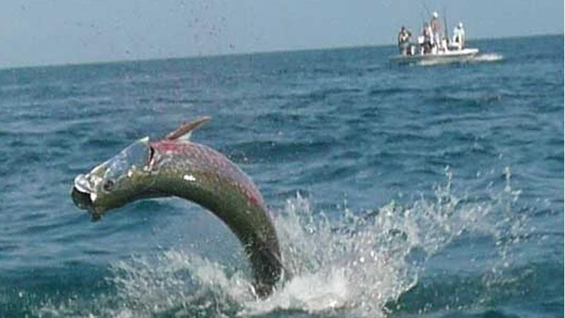 Bradenton Inshore Fishing