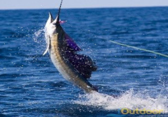 Cape Canaveral Offshore Fishing