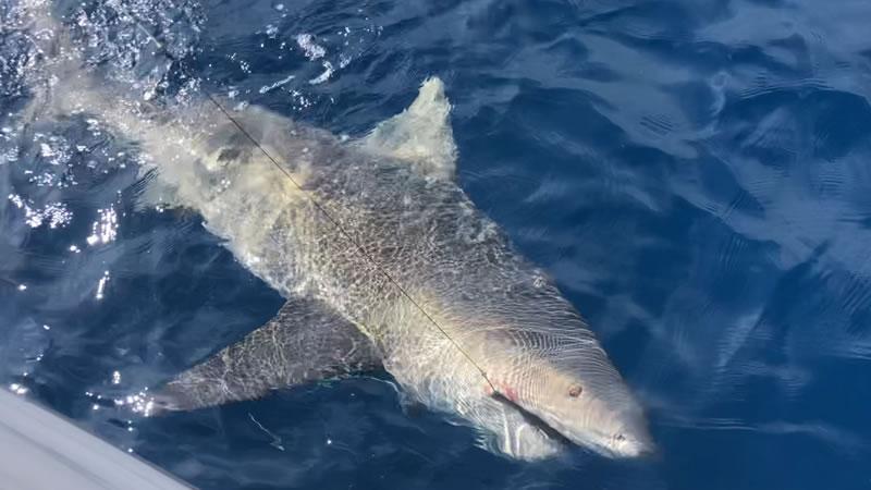 November Saltwater Fishing Report 2