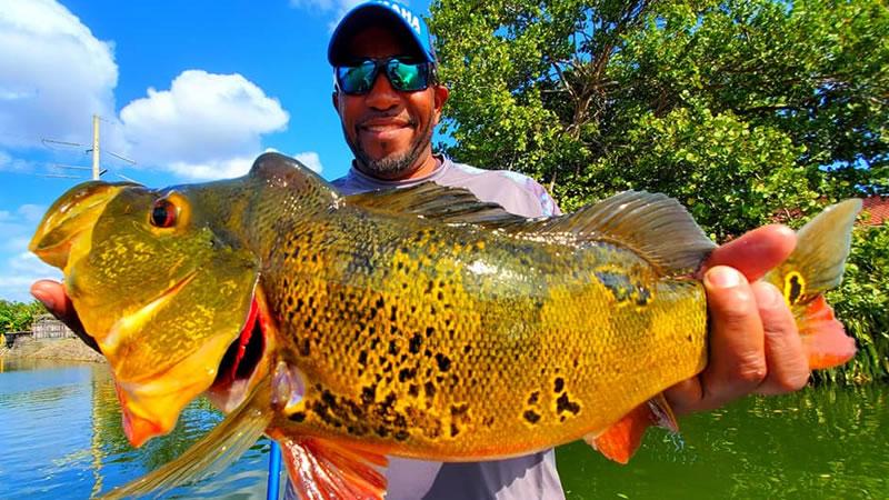2020 Miami Peacock Bass Fishing