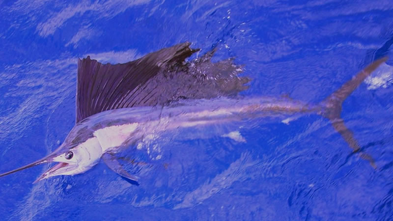 2020 Miami Deep Sea Fishing