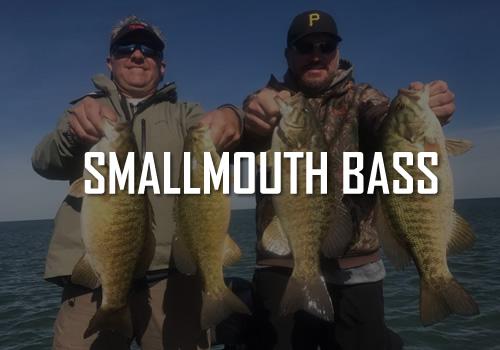 Smallmouth Bass Erie PA