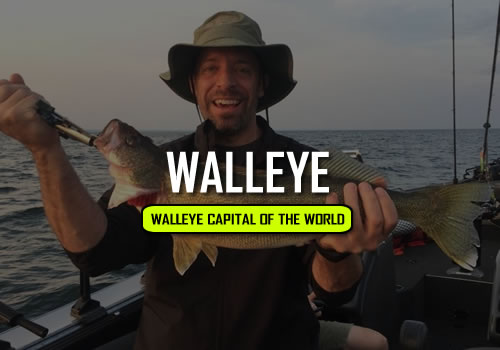 Erie PA Walleye Fishing