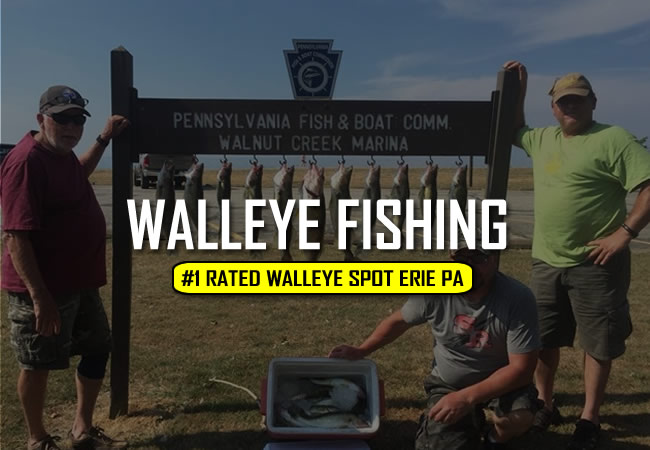 Lake Erie Walleye Charters