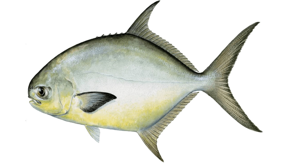 How to Catch Pompano