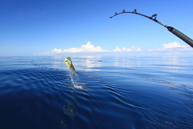 What Bait Works Best in Deep-Sea Fishing