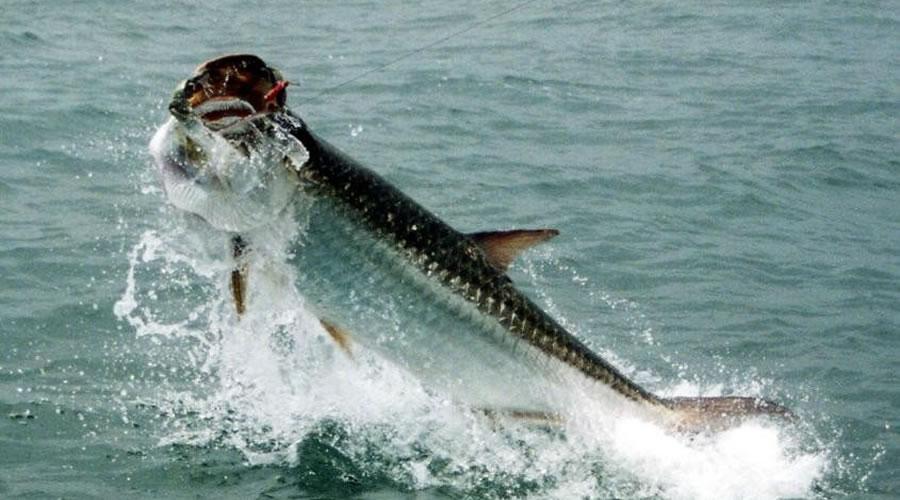 Tarpon Fishing in Florida Keys