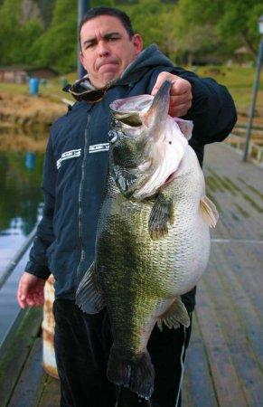Bass trophy fish - hard fighting Fish
